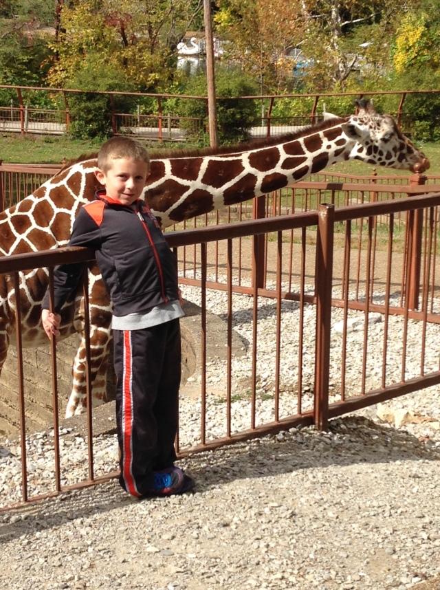 mesker park giraffe